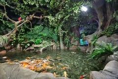 Het Aquarium van de de Ontdekkingswereld van Sotchi royalty-vrije stock fotografie