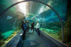 Het Aquarium van de de Ontdekkingswereld van Sotchi Rusland Stock Afbeeldingen