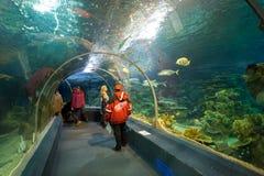 Het Aquarium van de de Ontdekkingswereld van Sotchi Rusland Royalty-vrije Stock Fotografie
