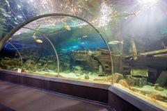 Het Aquarium van de de Ontdekkingswereld van Sotchi Rusland royalty-vrije stock afbeeldingen
