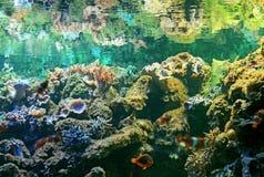 Het aquarium van de dierentuin stock afbeelding