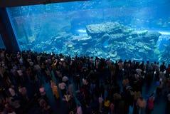 Het Aquarium van de Wandelgalerij van Doubai Royalty-vrije Stock Afbeelding