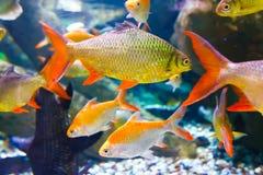 Het Aquarium van Doubai Royalty-vrije Stock Foto