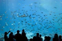 Het aquarium van Georgië Royalty-vrije Stock Afbeeldingen