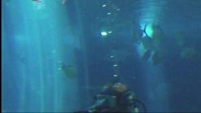 Het aquarium van Hawaï Maui van scuba-duikerhaaien stock videobeelden