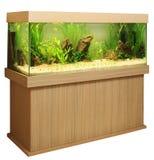 Het aquarium van het huis Stock Fotografie