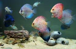 Het aquarium van het huis Royalty-vrije Stock Afbeeldingen