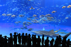 Het Aquarium van Okinawa Stock Foto