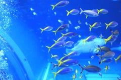 Het Aquarium van Okinawa royalty-vrije stock afbeelding
