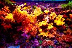Het aquarium van Singapore Stock Afbeeldingen