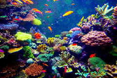 Het aquarium van Singapore Stock Fotografie