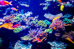 Het aquarium van Singapore royalty-vrije stock foto's