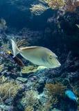 Het aquarium van Singapore met water en vissen Royalty-vrije Stock Afbeeldingen