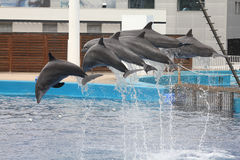 Het aquarium van Valencia Royalty-vrije Stock Fotografie