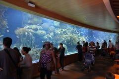 Het aquarium van Valencia Stock Afbeeldingen