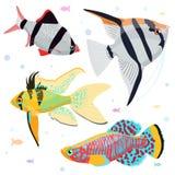 Het aquarium vist: de grote inzameling van hoogst gedetailleerde illustraties met tropische tank vist Stock Fotografie