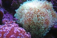 Het aquariumleven Stock Foto's