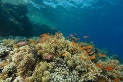 Het aquatische leven in het Rode Overzees stock fotografie