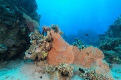 Het aquatische leven in het Rode Overzees royalty-vrije stock fotografie