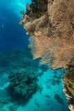 Het aquatische leven in het Rode Overzees stock foto
