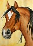 Het Arabische paard schilderen Royalty-vrije Stock Afbeelding