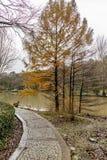 Het Arboretum van Atatà wordt ¼ rk gevestigd in het zuidoosten van de Belgrad-Bossen in Bahçeköy een deel van Sarıyer-district royalty-vrije stock afbeelding