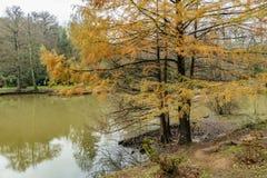 Het Arboretum van Atatà wordt ¼ rk gevestigd in het zuidoosten van de Belgrad-Bossen in Bahçeköy een deel van Sarıyer-district stock foto's