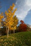 Het Arboretum van Dallas Stock Fotografie