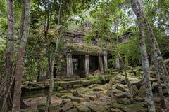 Het Archeologische Park van Angkor van de wildernistempel, Kambodja Royalty-vrije Stock Afbeeldingen