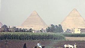 Het archivistische Egyptische Bedouin boeren werken stock videobeelden
