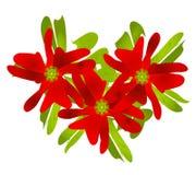 Het Art. van de Klem van de Poinsettia van Kerstmis Stock Foto's