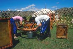 Het assembleren van een yurt, Mongolië Stock Foto's