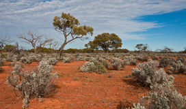 Het Australische landschap royalty-vrije stock foto's