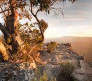 Het Australische landschap van de Struik Stock Afbeelding