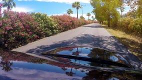 Het automobiele drijven langs landweg, mening bij palmen en bloeiende struiken royalty-vrije stock fotografie