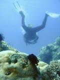 Het avontuur van het vrij duiken Stock Fotografie