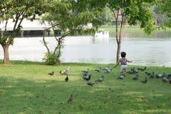 Het Aziatische babyjongen Spelen in park Royalty-vrije Stock Fotografie