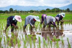 Het Aziatische landbouwers werken Royalty-vrije Stock Fotografie