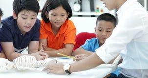 Het Aziatische leraar uitbreiden zich aan student in anatomieklasse met skeletmodel stock video