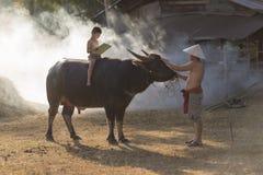 Het Aziatische lokale boek van de jongenslezing op buffels terug met zijn vader Stock Foto's