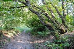 Het Baciu-bos Royalty-vrije Stock Foto