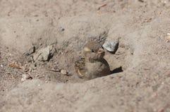 Het bad van het zand Stock Foto's