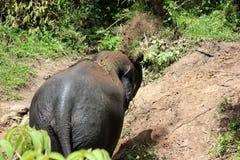 Het bad van het olifantsvuil stock afbeelding