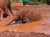 Het baden babyolifant Royalty-vrije Stock Foto's