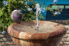 Het baden in de fontein Royalty-vrije Stock Foto's