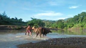 Het baden in de rivier stock fotografie