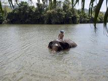 Het baden met een olifant Stock Foto