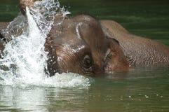 Het baden Olifant stock foto's