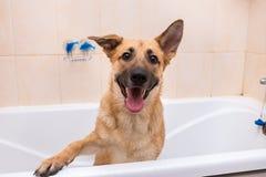 Het baden van de grappige gemengde rassenhond Hond die een Schuimbad neemt Verzorgende hond royalty-vrije stock foto's