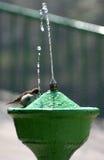 Het Baden van de mus Royalty-vrije Stock Afbeeldingen